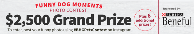 BHG Funny Dog Moments Photo Contest (#BHGPetsContest)