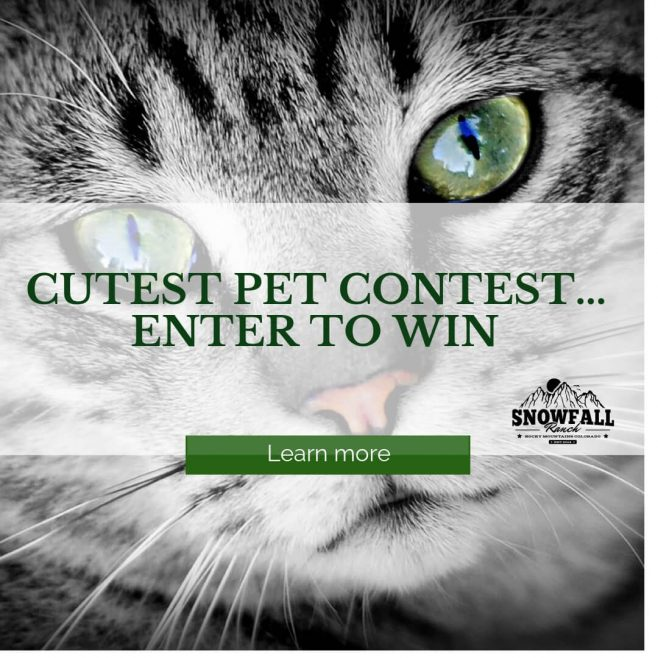Snowfall Ranch's Cutest Pet Contest