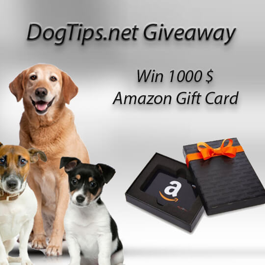 DogTips Contest