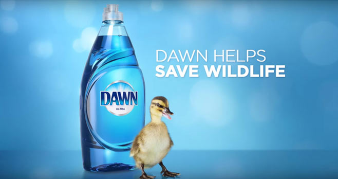 Dawn Wildlife Sweepstakes