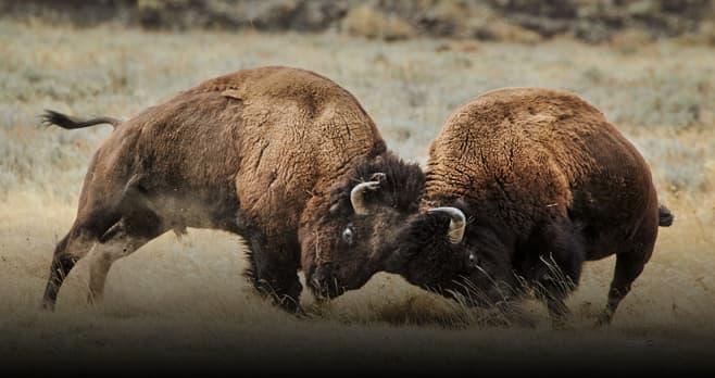 Yellowstone Live Sweepstakes 2019 (YellowstoneLiveSweeps.com)