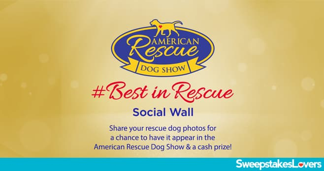 Hallmark Channel American Rescue Dog Show 2020 Contest